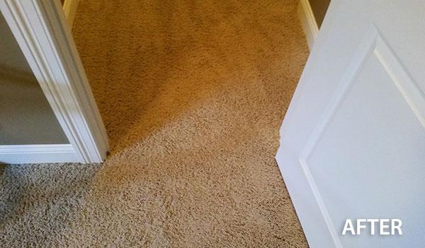 Repair And Restretching Absolute Carpet Care And Repair